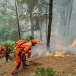 Uttarakhand Forest Fires: What preparations government have made this year?